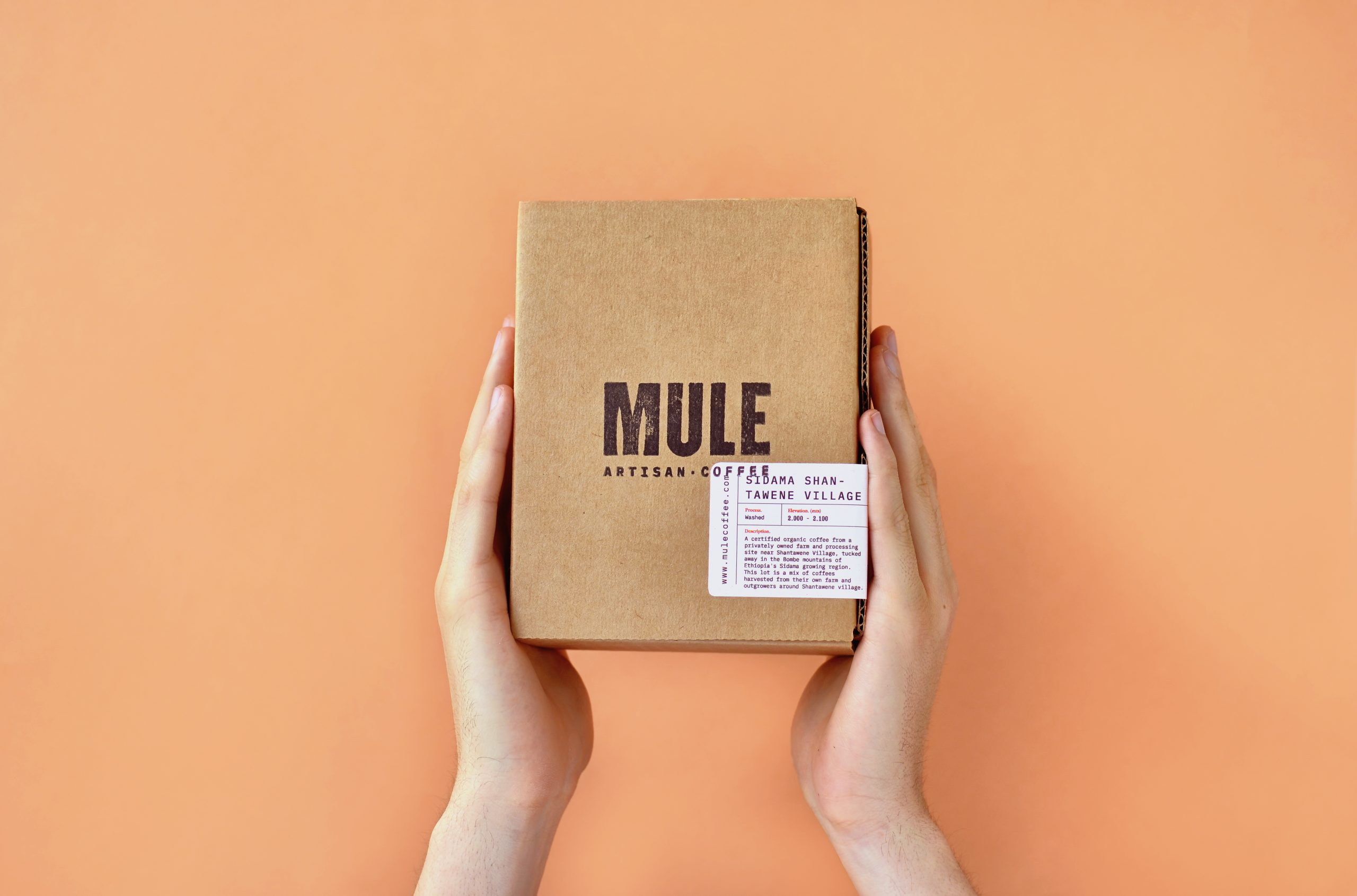 Mule Coffee Roasters